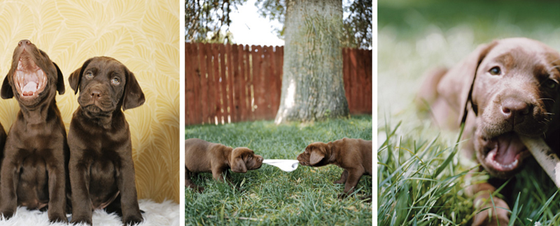 Cute Dogs Photography by Sharon Montrose